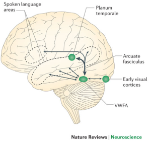 modif cerebro lectura