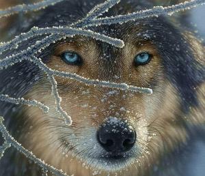 el-lobo-de-mis-vacíos